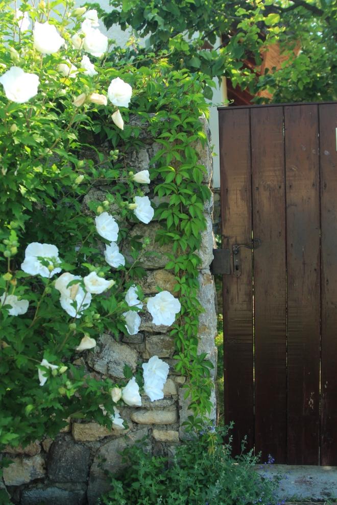 szögletes aranyhal nyári nap a kertben 001 kapu
