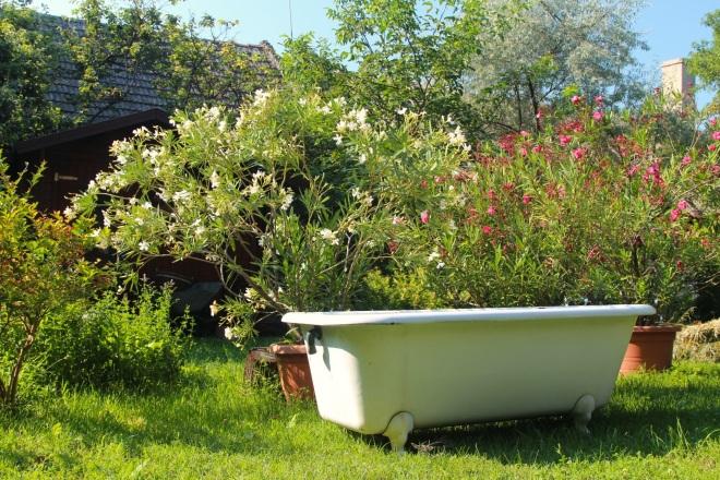 szögletes aranyhal nyári nap a kertben 010 kád