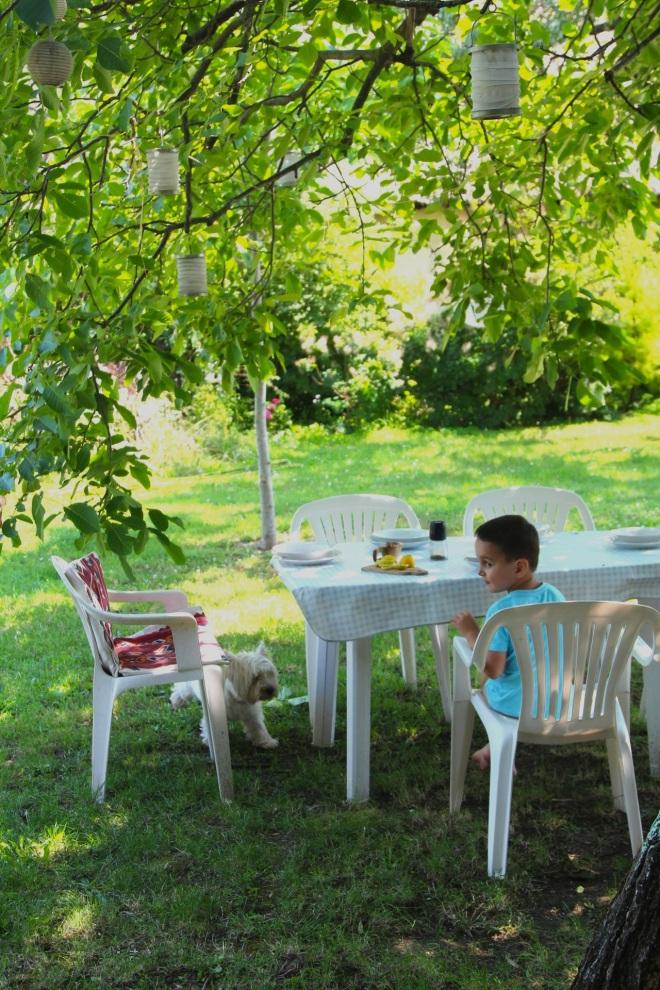 szögletes aranyhal nyári nap a kertben 013 ebéd 2