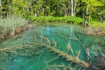 szögletes aranyhal Plitvicei tavak 1