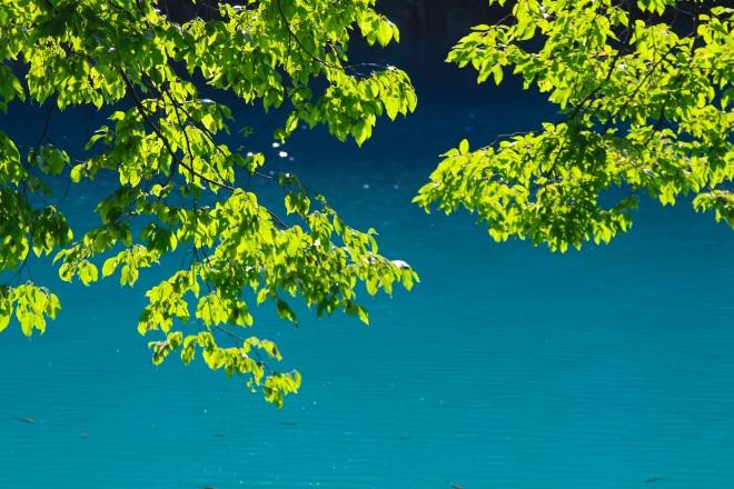 szögletes aranyhal Plitvicei tavak 9