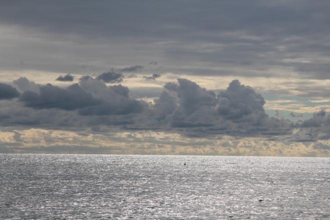 szögletes aranyhal tenger 1