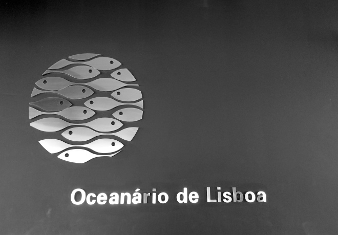 lisszaboni-oceanarium-5
