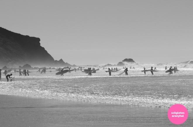 praia-do-amado-portugal-szogletes-aranyhal-4