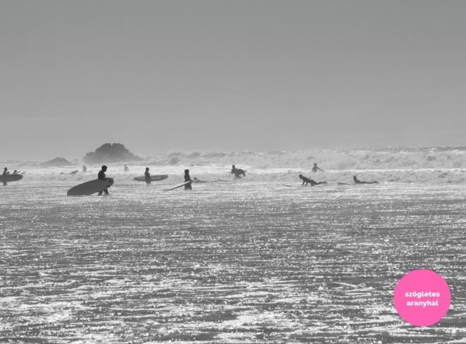 praia-do-amado-portugal-szogletes-aranyhal-5